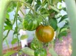 Baklažanai su mocarelos ir pomidorų įdaru